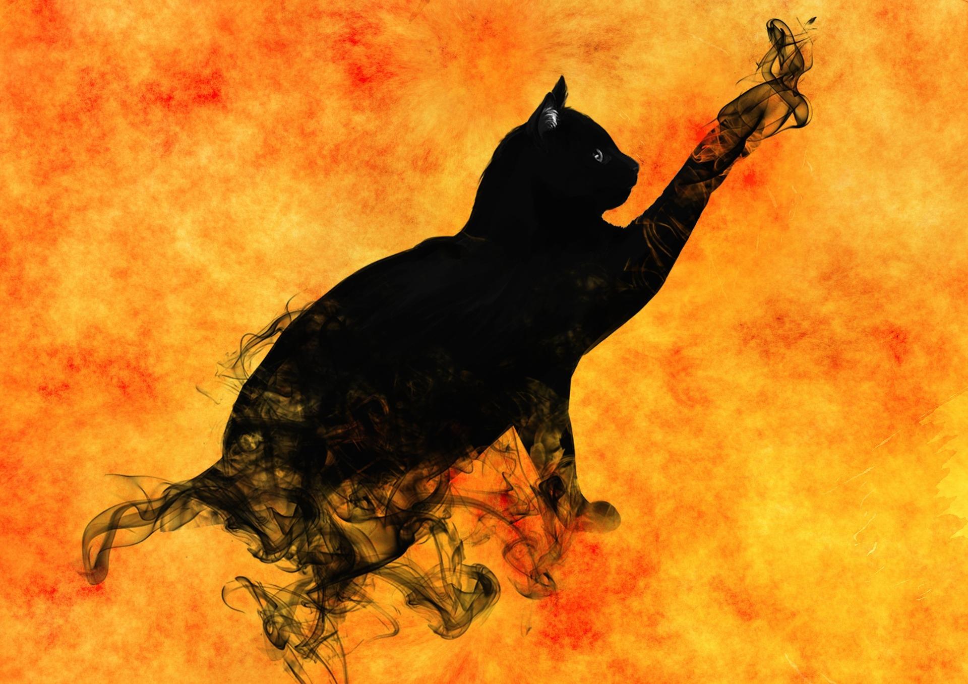 cat-995150_1920